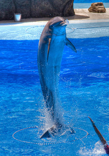 Palmitos Park delfin