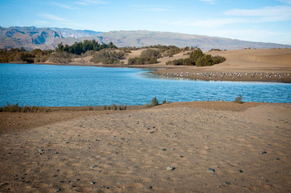 På fjellet på Gran Canaria kan man faktisk finne en innsjø!
